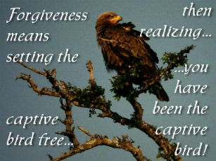Set Free by Forgiving